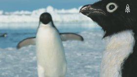 Belgesel Ekibinin Casus Hayvanları