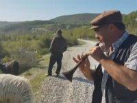 Keçileri Zurna ile Otlatan Kurnaz Çoban