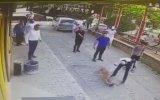 Aydın'da Kedinin Aklını Alan Pitbull 18