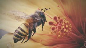Çiçeğin Etrafında Uçan Bal Arısının Ağır Çekim Görüntüsü