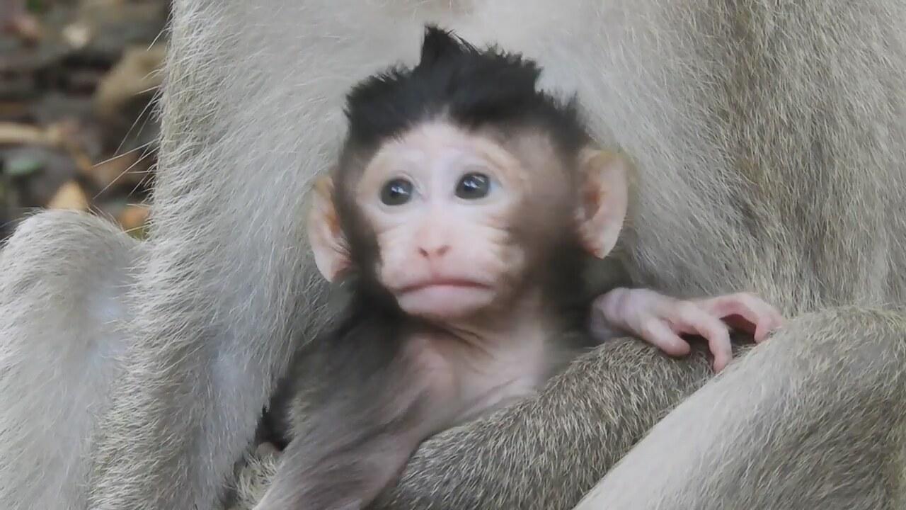Komik Maymun Yavrusu Hayvanlar Alemi Izlesenecom