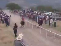 Yarış Atının Park Halindeki Arabaya Kafa Atması