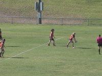 Kangurunun Kısa Süreliğine Rugby Maçını Yarıda Kesmesi