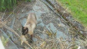 Kedinin Yakaladığı Tavşanı Baykuş Kaptı