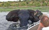 Nehirde Serinleyen Filin Turist Teknesine Saldırması