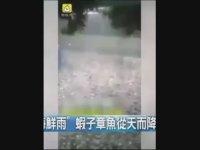 Çin'de Gökten Ahtapot Yağması