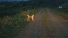 Tavşanların Bitmek Bilmeyen Kavgası