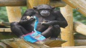 Ressam Olup Eserleri Açık Arttırmaya Çıkan Şempanze