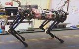 Engel Tanımaz Robot