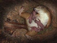 Sincabın Ikın Ikın Doğum Anı