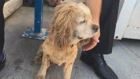 Sokağa Atılan Zavallı Köpek