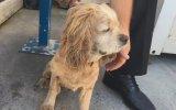 Yaşlandı Diye Sokağa Atılan Köpek İçin Kahrolan Abi