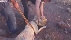 Kuyuya Düşen Köpek Mahalle Sakinleri Tarafında Kurtarıldı