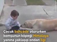 Köpeğin Down Sendromlu Çocuğa Yaklaşımı