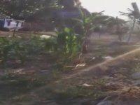 Saldırgan Kadının Köpeği Odunla Dövmesi