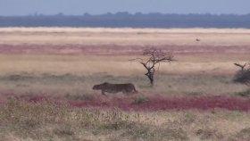Çita Vs Ceylan