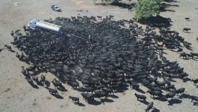 Tır İle Su İhtiyaçları Karşılanan Yüzlerce Sığır