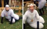 Koyun Kostümlü Koyun Gibi Hareket Eden İnsanlar