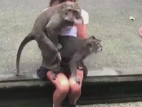 Kızcağızın Kucağında Çiftleşen Maymunlar