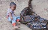 Minik Çocuğun Piton Yılanıyla Oyuncak Gibi Oynaması