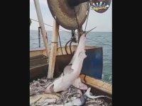 Yanlışlıkla Köpek Balığı Tutmak