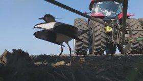 Yumurtalarını Koruyan Kuşa Zarar Gelmemesi İçin Çabalayan Çiftçi