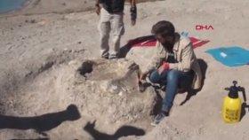 10 Milyon Yıl Önce Yaşamış Fil Fosilleri Bulan Çoban