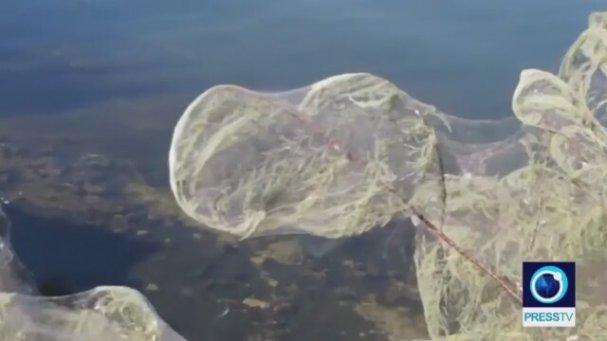 Yunanistan'daki Sahil Şeridini Karıştıran Örümcekler