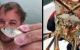 Korkunç Görünümlü Istakozun Balık Yiyişi