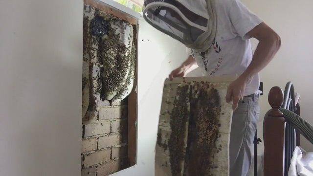 Arılar Izle Hayvanlar Videoları Izlesenecom