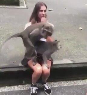Hatun Kucağında Çiftleşen Maymunlar
