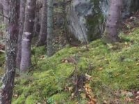 Ormanda Nefes Alan Zemin