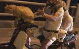 Üç Kedi ve Bir Köpekle Motosiklet Kullanmak