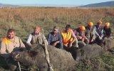 Vurdukları Domuzlarla Gövde Gösterisi Yapan Avcılar