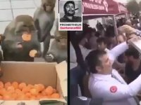 Efendice Mandalina Alan Maymunlar vs Baklava İzdihamı