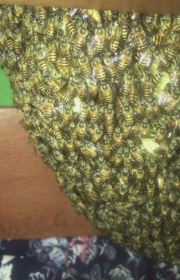 Gardırop Çekmecesine Yuva Yapan Bal Arıları
