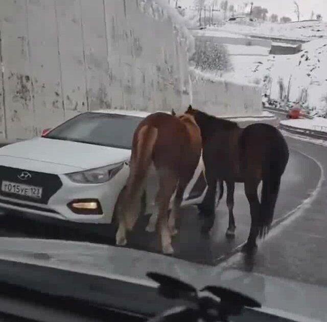 Yol Ortasındaki İnsan Canlısı Atlar