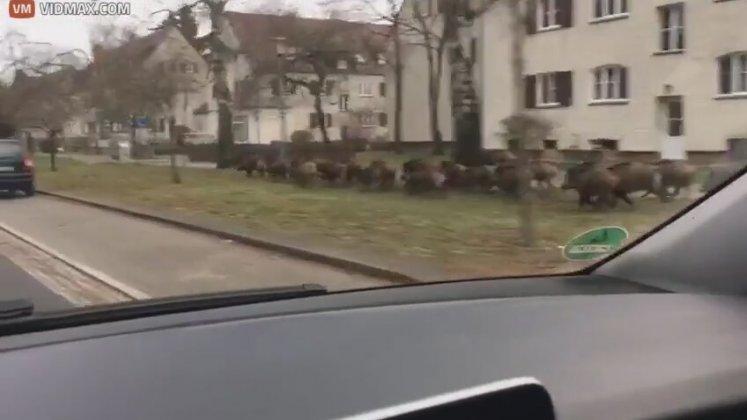 Alman Kasabasinda Beklenmedik Müsafir