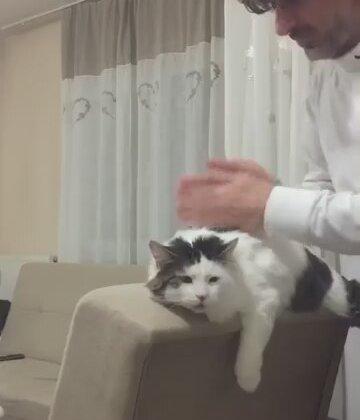 İnsan Dostuna Masaj Yaptıran Sevimli Kedi