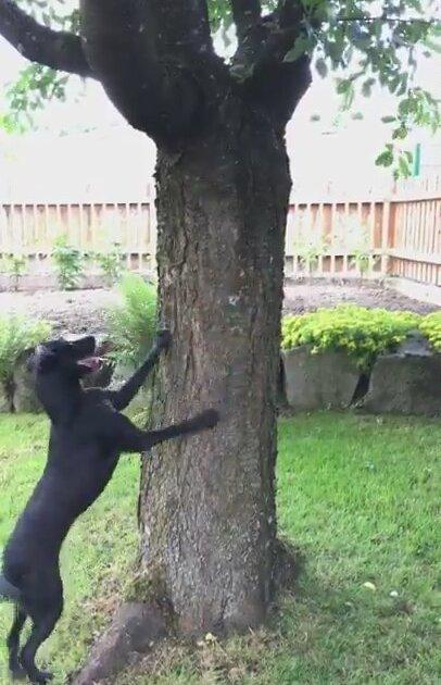 Köpek İle Günlük Stresini Atan Sincap
