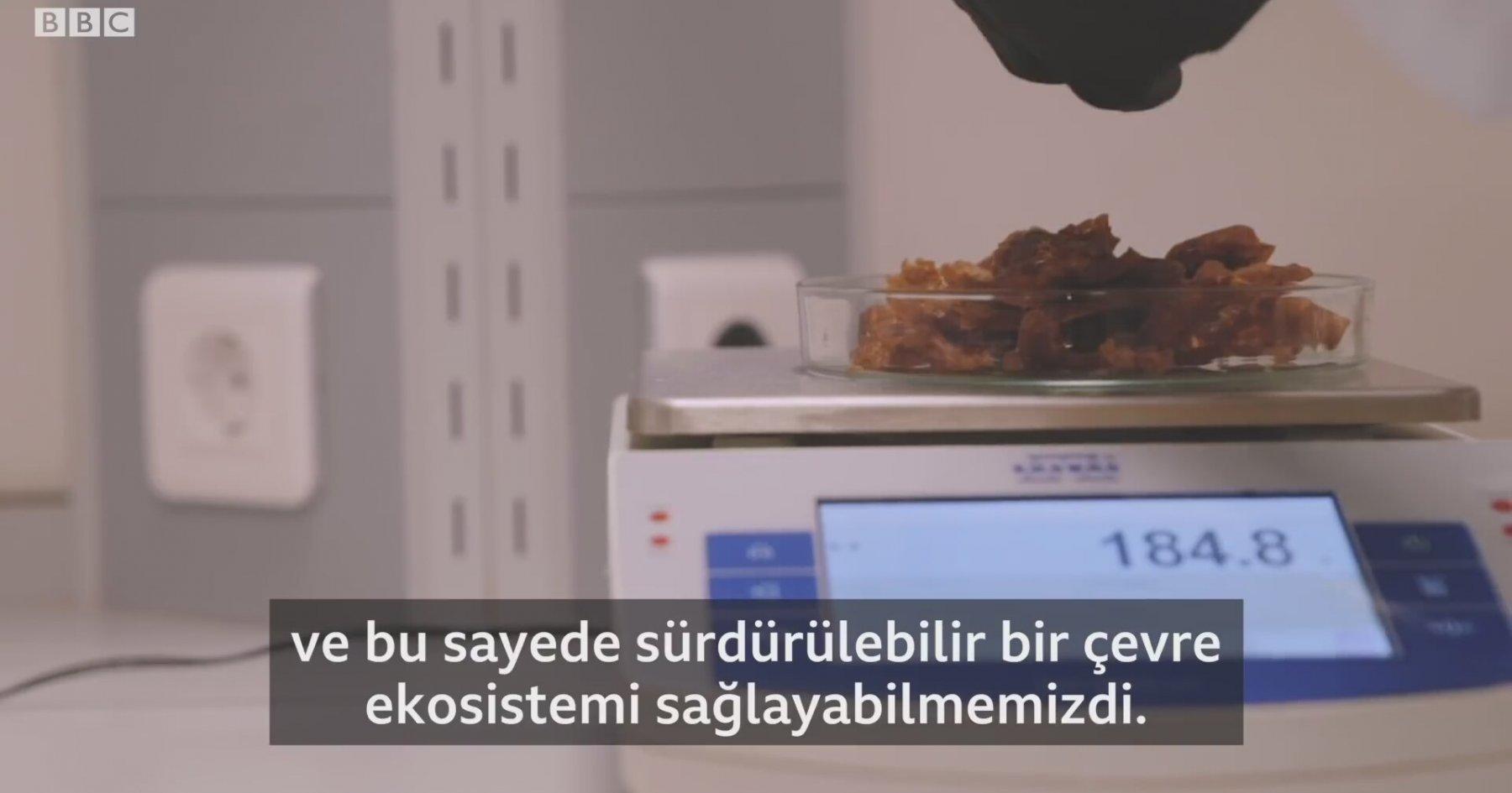 Türk girişimciler zeytin çekirdeğinden biyoplastik üretiyor