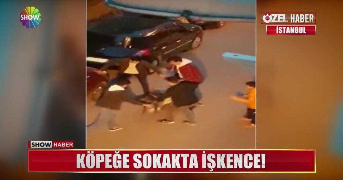 Bu Kez İnsan Pitbull'a Saldırdı