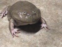 Sevilen Kurbağanın Haykırması
