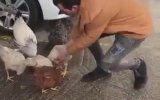 Yanındaki Tavuğu Alan Adama Saldıran Horoz