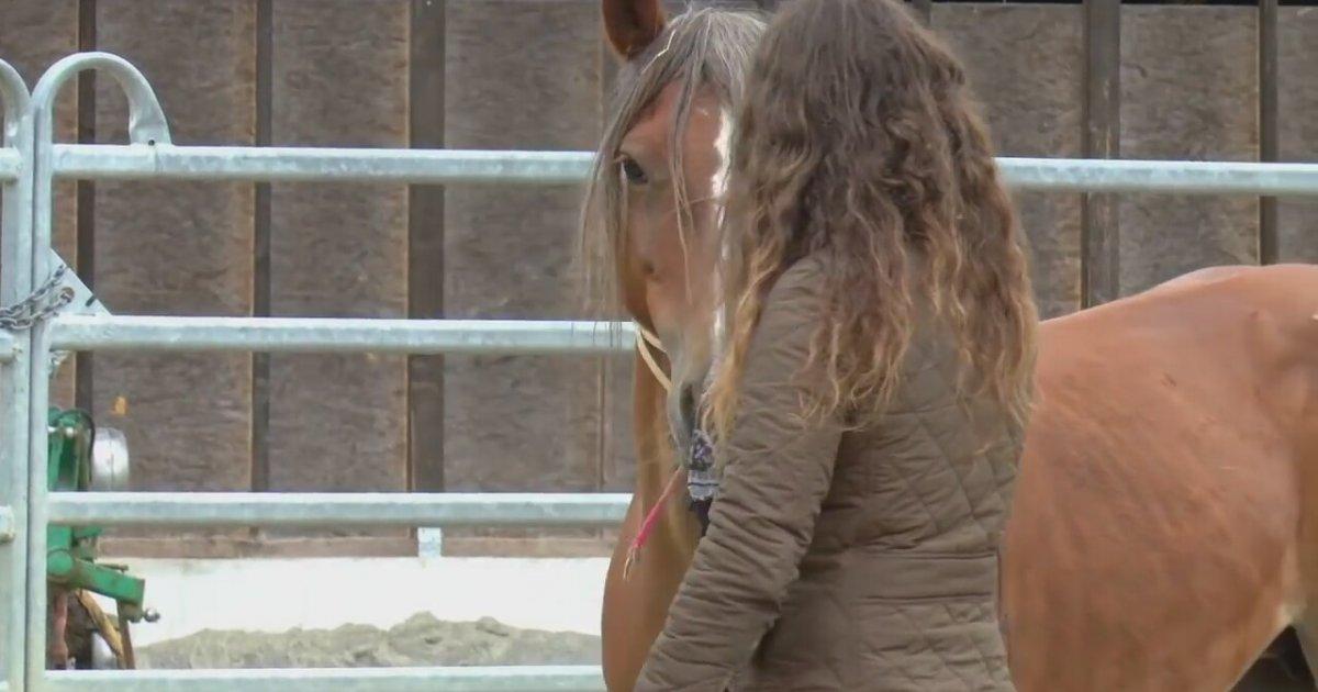 Bir Atın Güvenini Kazanmak