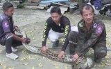 Evin Kedisini Yiyen Piton Yılanının Operasyonla Yakalanması