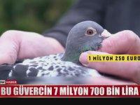 Dünyanın En Pahalı Güvercini