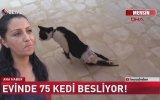 Evinde 75 Kedi Besleyen Kadın