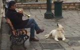 Saksafona Eşlik Eden Köpek