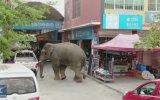 Çin Sokaklarında Kafasına Göre Takılan Fil